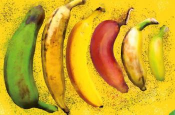 Hello Yellow! Die faire Banane im Rampenlicht!